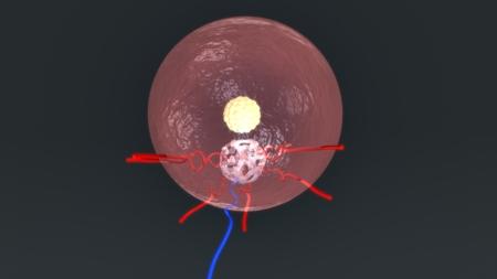 Blastocyst in the endometrio ET top Stock Photo