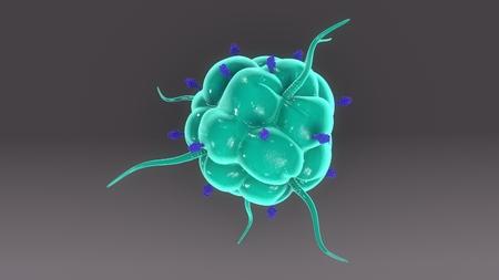 Macrophage & Receptors top