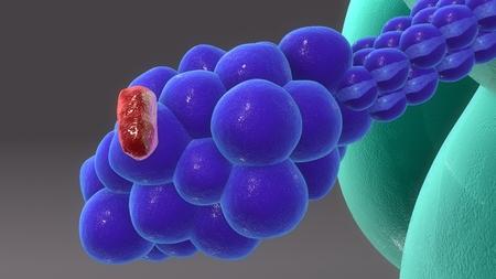 Macrophage & Receptors perspective