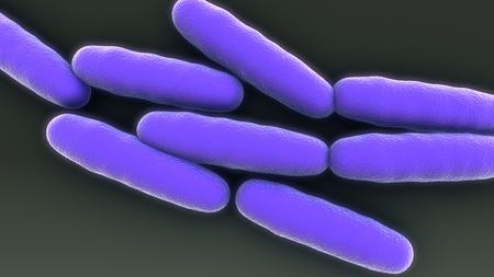 Bacteria Multiplication top