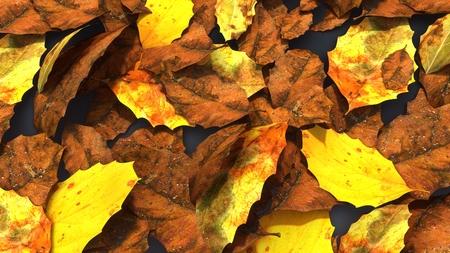 Decomposed leaves aerial