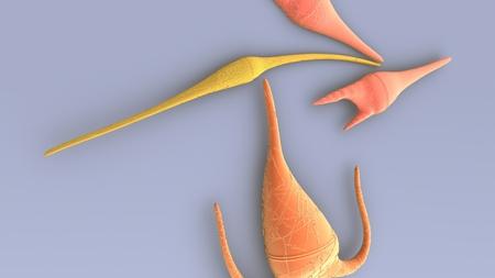 Dianoflagellates closeup Stock Photo