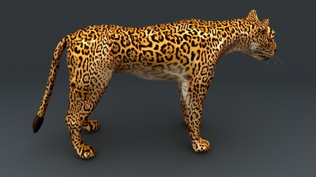 Cheetah back Stock Photo