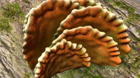 Fruiting bodies closeup Stok Fotoğraf