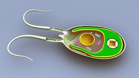 Perspective de la structure des algues Banque d'images - 88247359