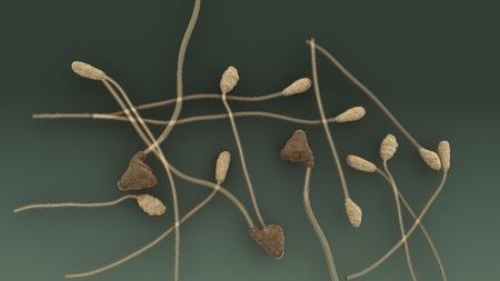 Collectotrichum aerial