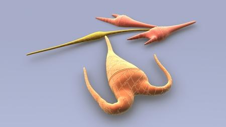Dinoflagellates top