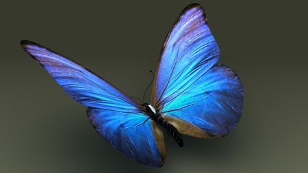 Butterfly aerial