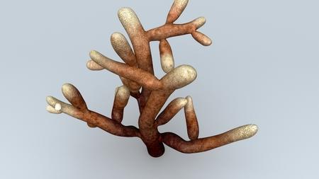 Mycorrhiza top
