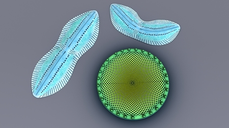 Diatoms top Stock Photo