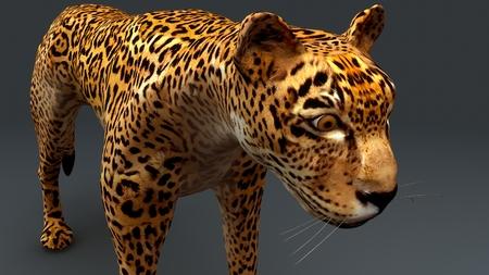Cheetah_closeup Stockfoto