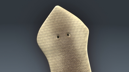 Dugesia(planarian) クローズ アップ 写真素材