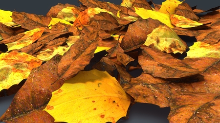 Decomposed leaves_perspective Stock Photo