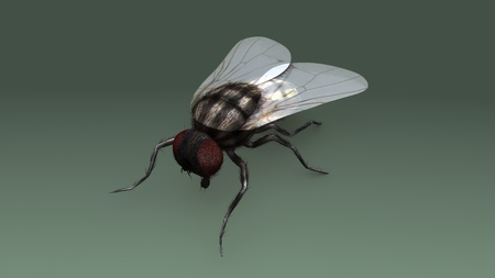 Housefly aerial