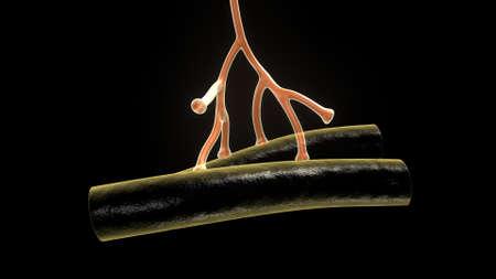 Human Anatomy of nervous system nerve cell or neuron Zdjęcie Seryjne