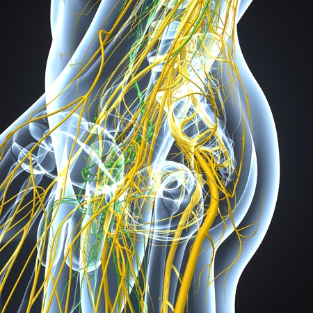 Nervous System with Lymph Nodes lateral view