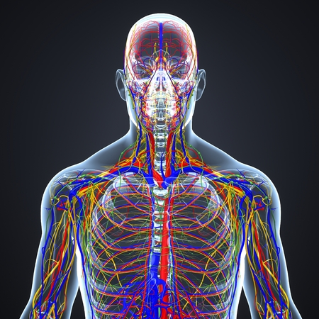 Circulatory and Nervous System with Lymph Nodes Imagens - 105318255