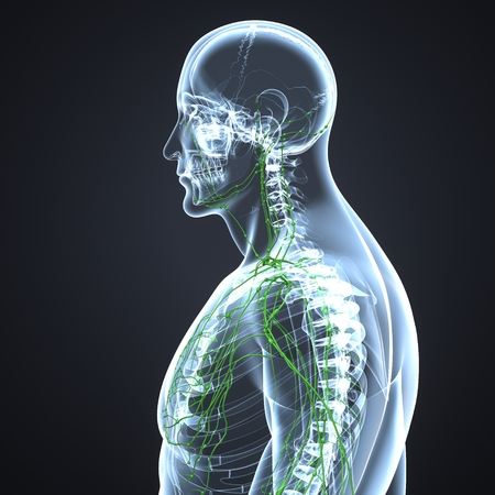 Lymph Nodes lateral view Stock Photo