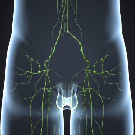 Lymph nodes posterior view 스톡 콘텐츠