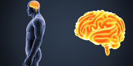 Brain zoom with Skeleton Body Lateral view Stock Photo
