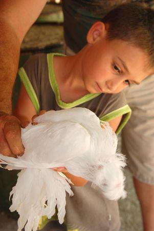 Boy with exotic dove .Pidgeon. Stock Photo
