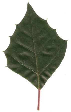 Leaf of health Stock Photo