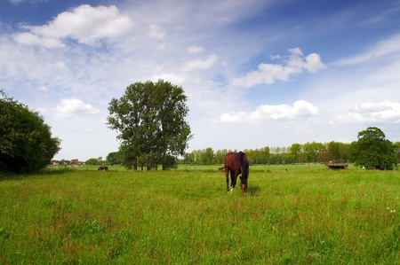 Landscape with Horses in Flanders