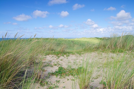 Nature conservation at the northsea dunes