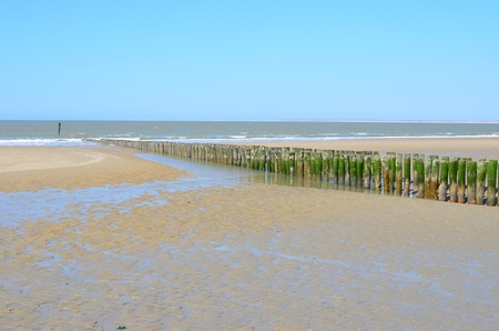 Beach with wooden breakwaters in Breskens, Zeeland