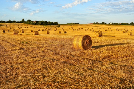 Filed with rolls of straw in late summer in Charente Maritime, France Stockfoto