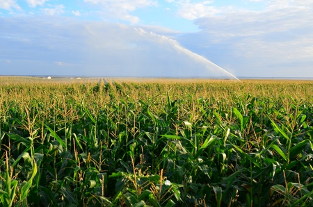 Irrigation of corn field with water jet in Charente Marime, France Stock Photo