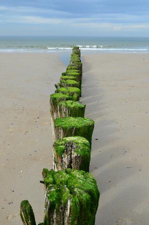 seaview: Wooden breakwaters on the beach in Nieuw Haamstede Zeeland Holland