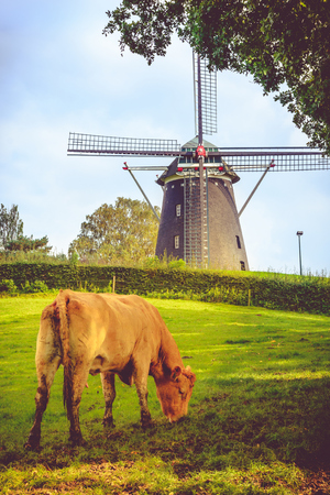 Windmill and cow in South Limburg,  Holland Stock Photo