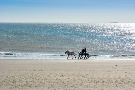 Riding on a sunny beach in horse carriage in Zoutelande, Holland Stock Photo