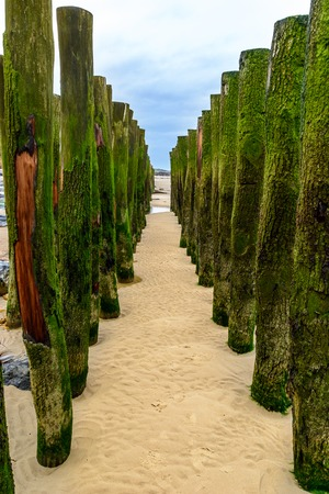 Wooden breakwater ons beach of Wissant, cote opale, cap blanc nez, France Stock Photo - 99159412