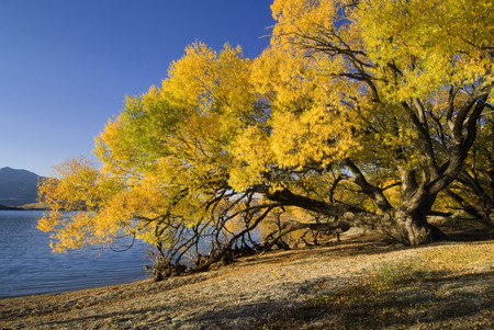 tranquille: Autumn colors on lake Wanaka south island New Zealand Stock Photo
