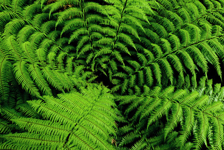Center of fern tree in native bush New Zealand