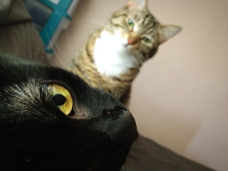 cats Stok Fotoğraf