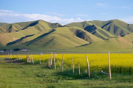 칭하이 호수 강간 꽃 풍경 경관 전망 스톡 콘텐츠