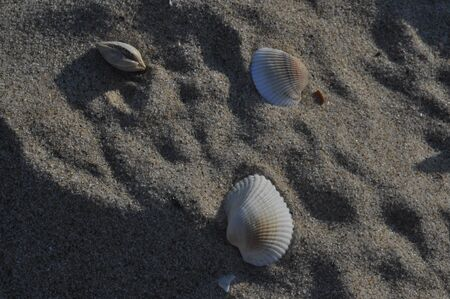 Sand and sun shell game