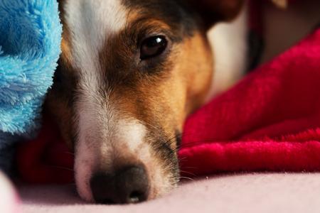 trato amable: Nuestro perro acababa de despertar. Foto de archivo