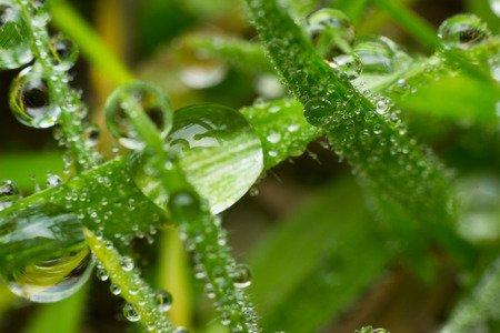 dewdrops: Dewdrops on a blade of grass,detail.