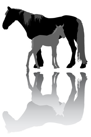 foal: Mare with a foal
