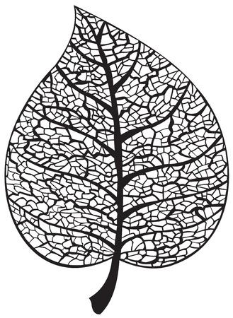 leaf vein: Leaf skeleton silhouette
