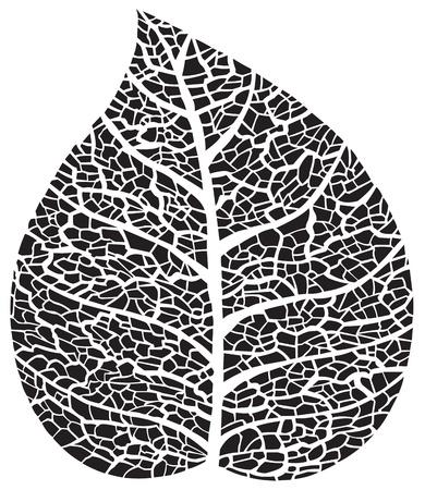 Black leaf skeleton silhouette Vector