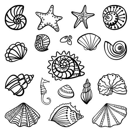 Set of seashells on white background. Vector illustration