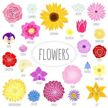dahlia: Conjunto de flores planas abstractas. Ilustración vectorial