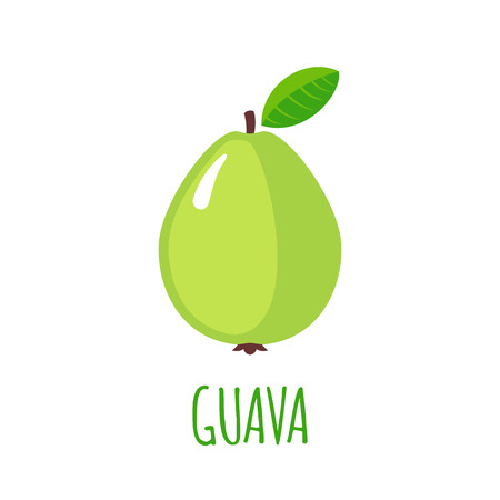 guava fruit: Guava in flat style. Illustration