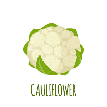 Cauliflower in flat style. Stock Illustratie