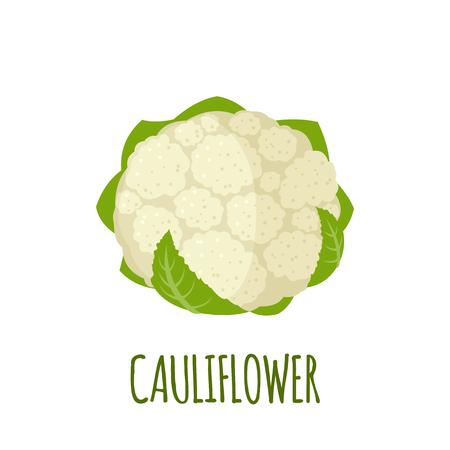 Cauliflower in flat style. Illustration